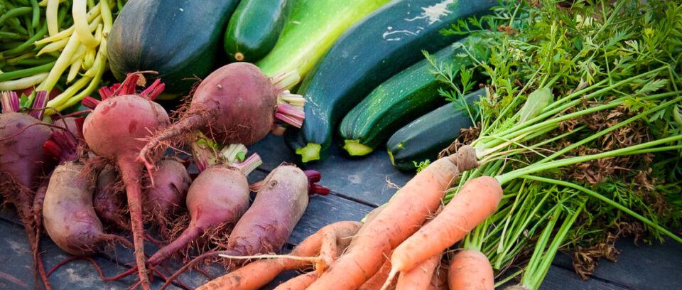 légumes2 1170 x 492